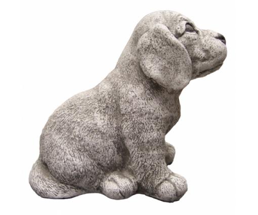 Beagle, pup zittend
