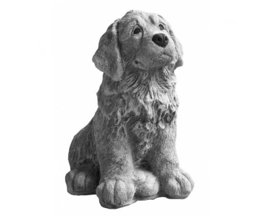Berner Sennenhond pup zit