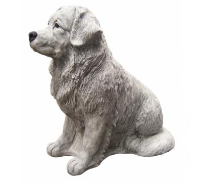 Berner Sennenhond zittend