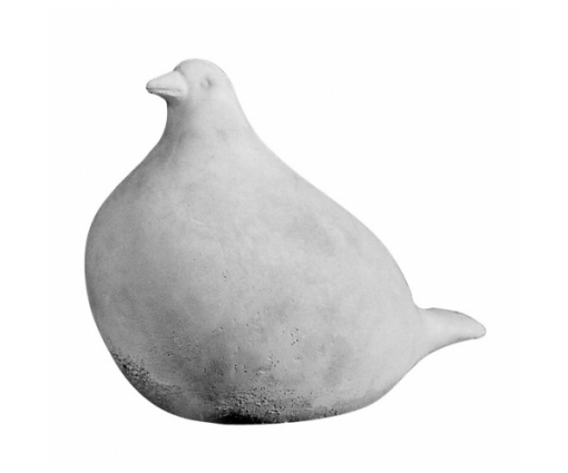 Bolle duif zittend groot grijs