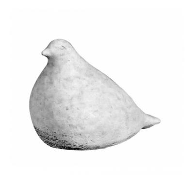 Bolle duif zittend klein grijs