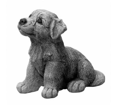 Border Collie, pup zittend