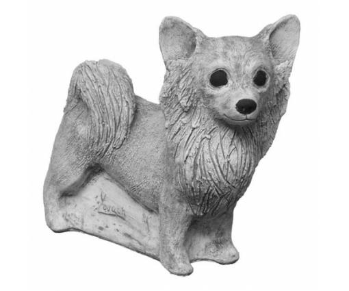 Chihuahua Langhaar staand