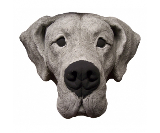 Duitse Dog kop
