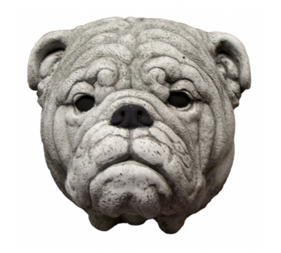 Engelse Bulldog kop