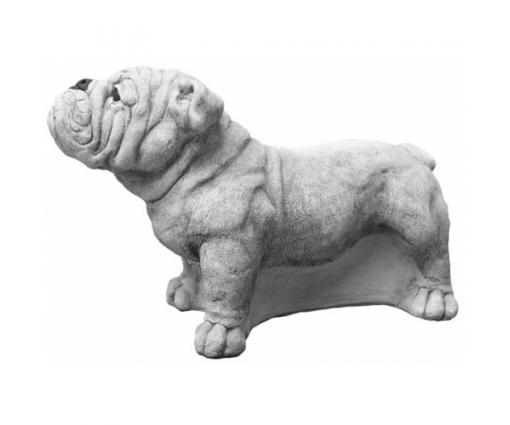 Engelse Bulldog staand