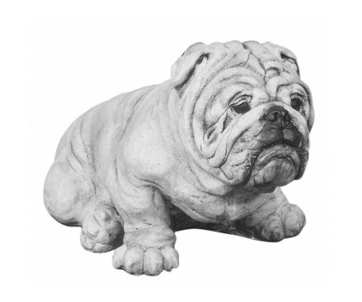 Engelse Bulldog zittend groot