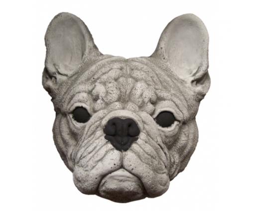 Franse Bulldog kop