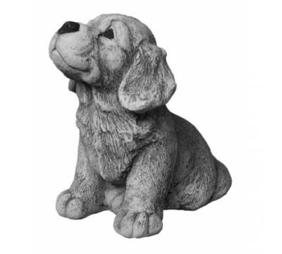 Golden Retriever, pup zittend