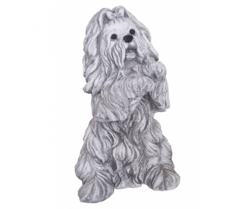 Hondje zittend groot