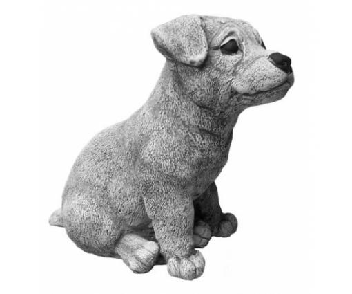 Jack Russell Terriër, pup zittend