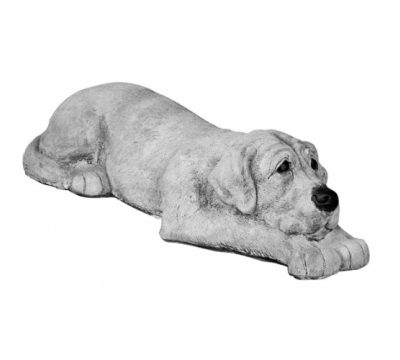 Labrador liggend