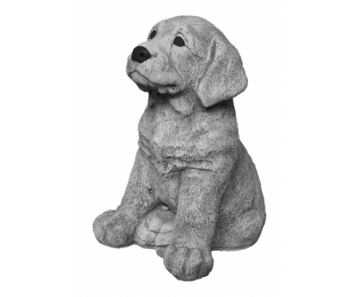 Labrador Retriever pup zittend