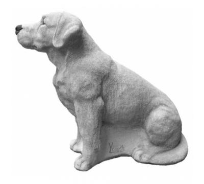 Labrador Retriever zittend