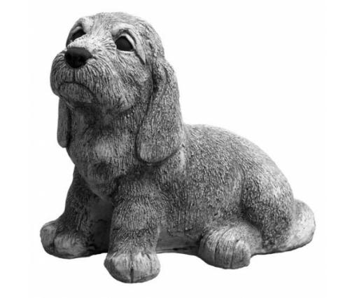 Petit Basset Griffion Vendéen, pup