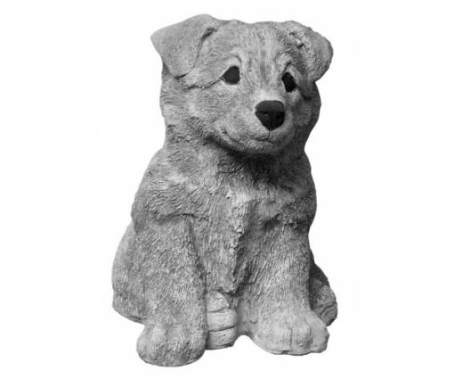 Shetland Sheepdog, pup zittend