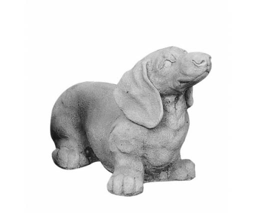 Teckel puppie ruwharig