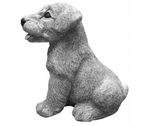 Welsh Terriër, pup zittend